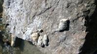 Rock Glen Conservation. Photo Credit: Jenny Ward